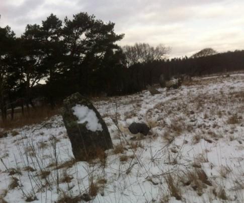 Här syns några av de gamla mäktiga stenarna från ett gravfält från Bronsåldern.