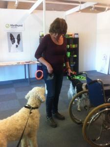 Charlie ska med på rullstolspromenad.