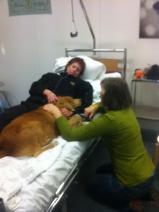 Milo ger värme o stöd till mycket sjuk patient.