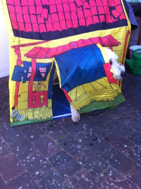 Charlie önskar sig numera ett eget Pippi-tält.