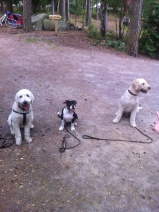 Försök att få alla tre på samma bild, inte lätt.... Charlie , Rosa och Torsten.
