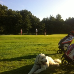 Charlie i skuggan av golfvagnarna, golfgänget i bakgrunden.
