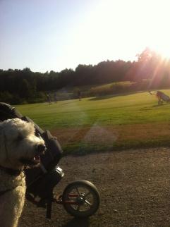Vackert på golfbanan.