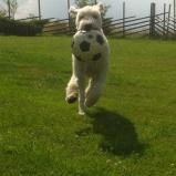 Stor glädje över ny boll!