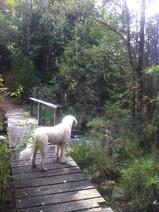 På bron i skogen.