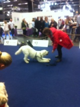 Sedan hade Hundakademin att prova på lite av deras träning. Det ville vi ju så klart =) Här finslipar vi på Buga.