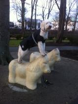 Dogparkour på häst i Varberg.