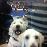 Mitzy ville också va med på bild- Charlie tyckte det var kul!