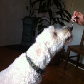 Charlie tar försiktigt godisbit från gaffel.