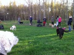 Kul med så många olika hundar .