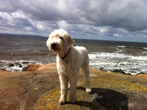 Himmel, hav och hund. Vackert!