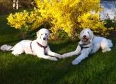 Charlie och Mitzy