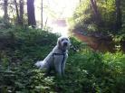 Vacker hund och natur.