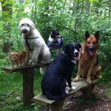 Putte, Charlie och Pedro på övre raden Nova och Ville på nedre bänken.