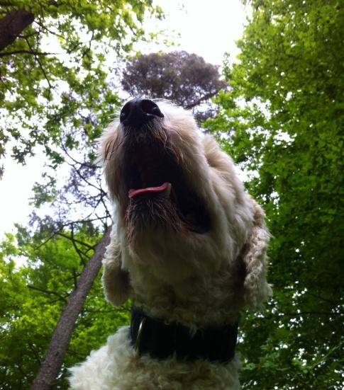 Charlie underifrån på skogspromenaden =)