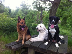Ville, Charlie och Nova
