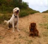 Charlie och Bella på strandpromenad.