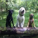 Katie, Shiela och Charlie