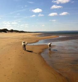 Vacker dag på stranden.