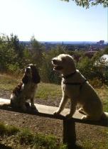 Svea och Charlie