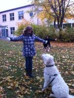 Kontaktövning- en godis i var hand och hunden får en godis när den söker ögonkontakt.