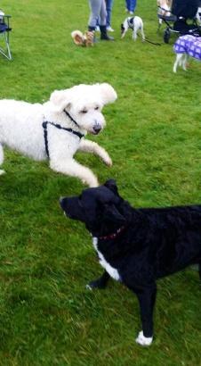 Charlie bjuder upp Holly.