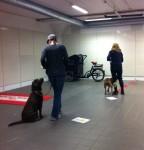 Duktiga hundar allihopa =)