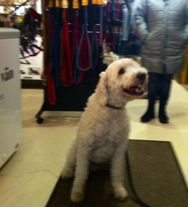 Charlie kollar läget i Hundboden.