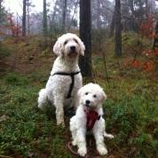 Saga och Charlie i skogen.
