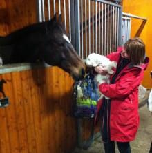 Saga sniffar på Showie, den nyfikna snälla hästen.
