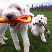 Nya leksaker inhandlade på Dogz på rean