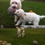 Den gamla bollen tar Charlie alltid först om han får välja... ha