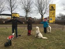 Vi gör kontaktövningar, godis i varje hand och hålla ut armarna och när hunden tittar på föraren så får de en av godisarna.
