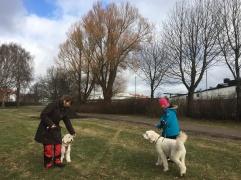 Hundmöte Charlie och Saga