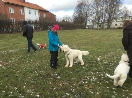 Linnea och Cahrlie i mitten och vi andra cirklar runt. Alla måste jobba med sin hund , både den i mitten och de som går runt.