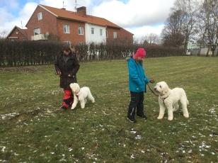 Linnea har hand om Charlie och står i mitten och vi andra ska gå runt dem.