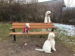 Gruppbilden =) Lycka, Charlie och Saga