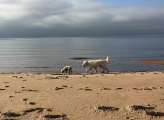 Saga och Charlie i strandkanten.