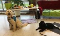 Charlie och Molly, strax innan fikapausen, då mattarna fick varsin ljuvligt god semla =)
