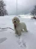 Saga i snön vid stoppet i Brahehus.