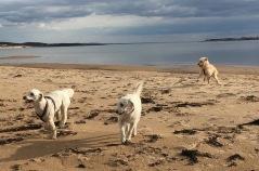 Mitzy, Tara och i luften Pyret =)