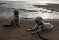 Charlie och Milou är bröder. Snyggingar!