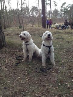 Charlie och Hubbe, halvbrorsor med samma pappa Magnum.