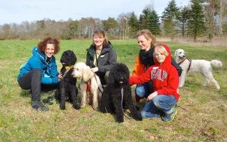 Mamma Ronja med sina döttrar Saga och Lakrits. Det var ca 25 labradoodles som kom till träffen i Halmstad. Jättekul!
