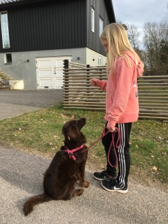Lillmatte till Charlie från Varberg, lånade Smilla på promenaden.