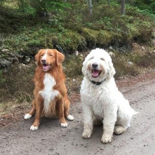 Snygga goa Vill och Charlie delar på rollen som Sandy. Vill kommer spela med Norah och Charlie med Fanny.