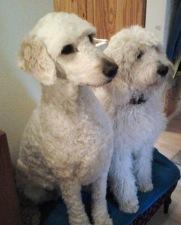 Mitzy och Saga, sötnosar