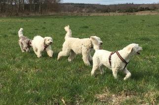 Mitzy, Charlie, Saga och Eliot.