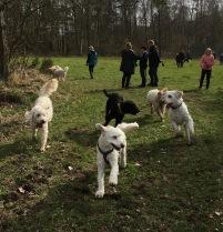 Glädjen syns =) Mitzy först, Charlie, Milou, Ronja och Saga.