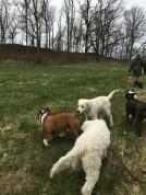 Valpar kollar in härliga Bruno